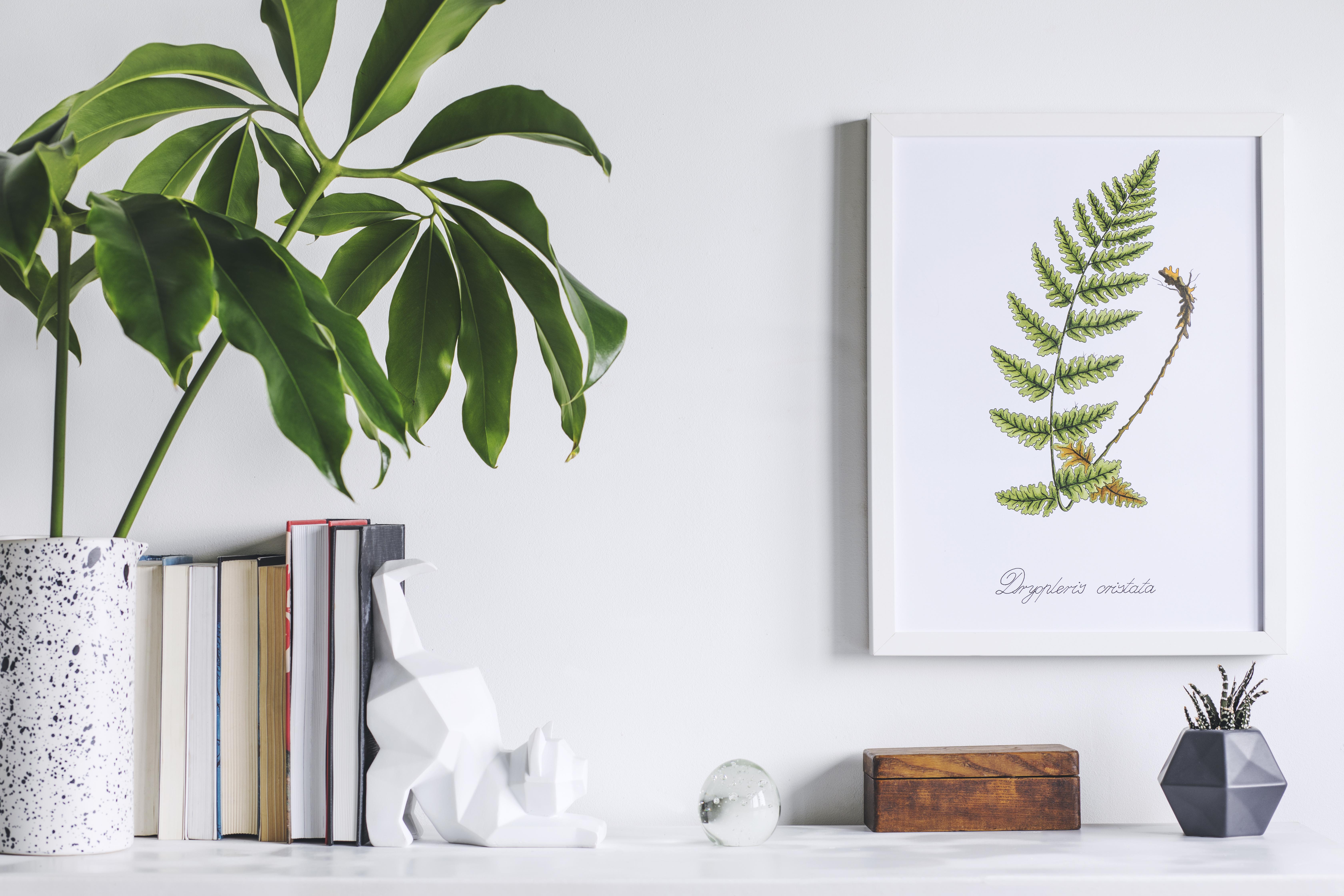 Poster botanici per decorare la parete